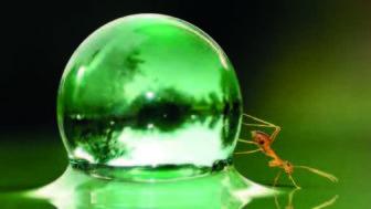 Her Şeyi Akılla İzaha Kalkışanlara Karınca Hikâyesi