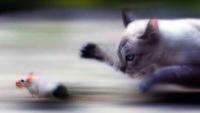 Batı İnsanının Eğitilmiş Kedi Rolü